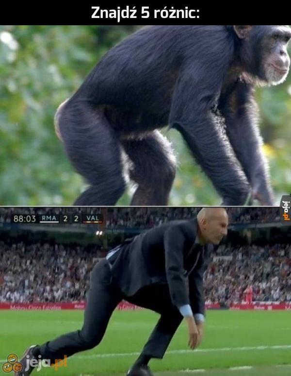W końcu wszyscy pochodzimy od małpy