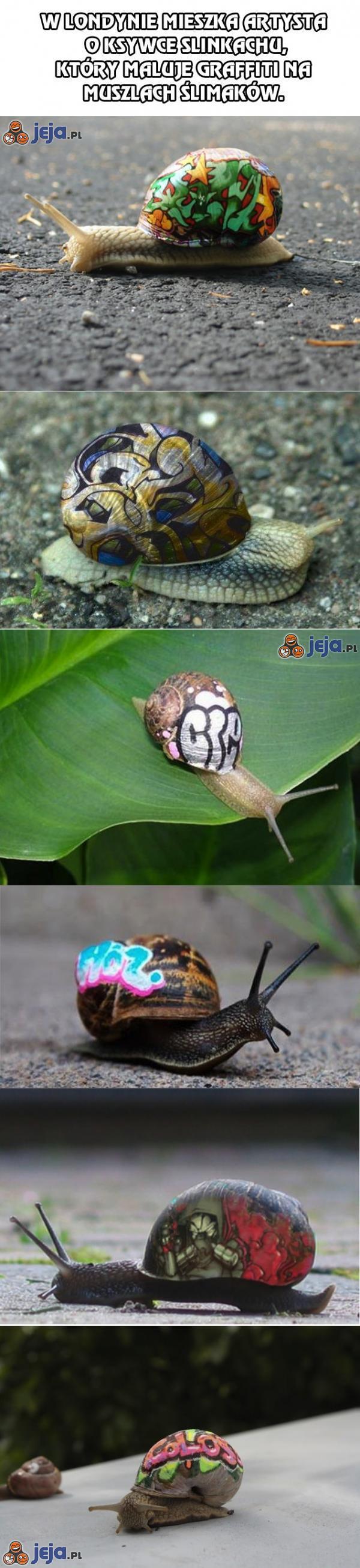 Artysta malujący graffiti na muszlach ślimaków