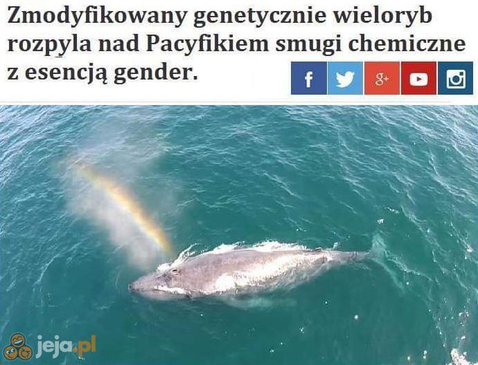 Przyjdzie gender, wsadzi Cię do wora, wrzuci do jeziora...