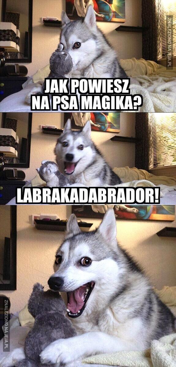 Pies magik?