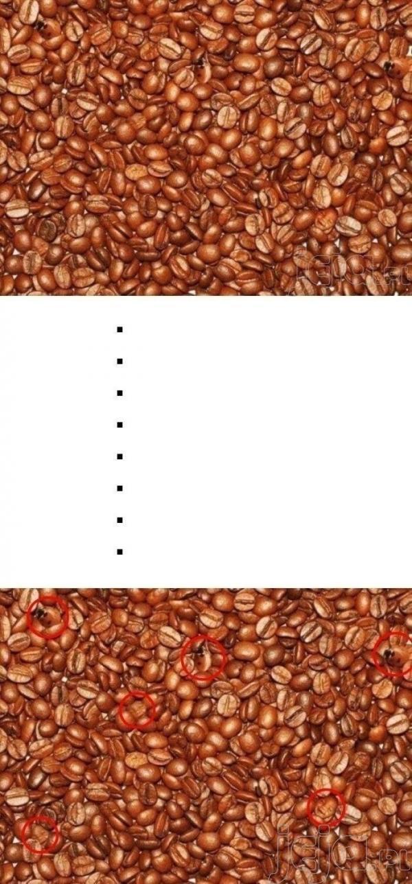 Co można znaleźć w ziarenkach kawy