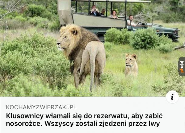 Lwy uniewinniono