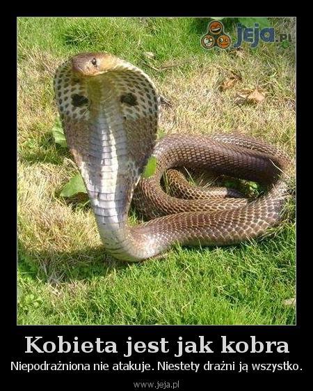 Kobieta jest jak kobra