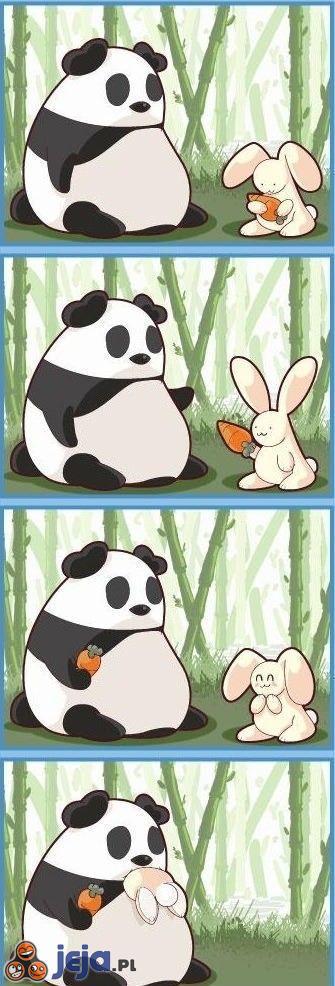 Króliczek i panda