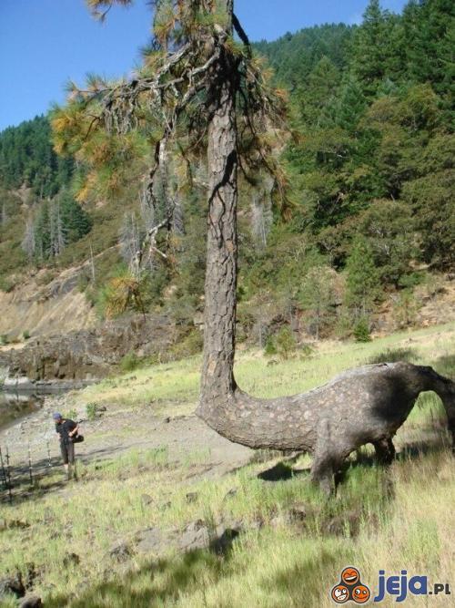 Dziwne oblicze natury - Drzewozaur