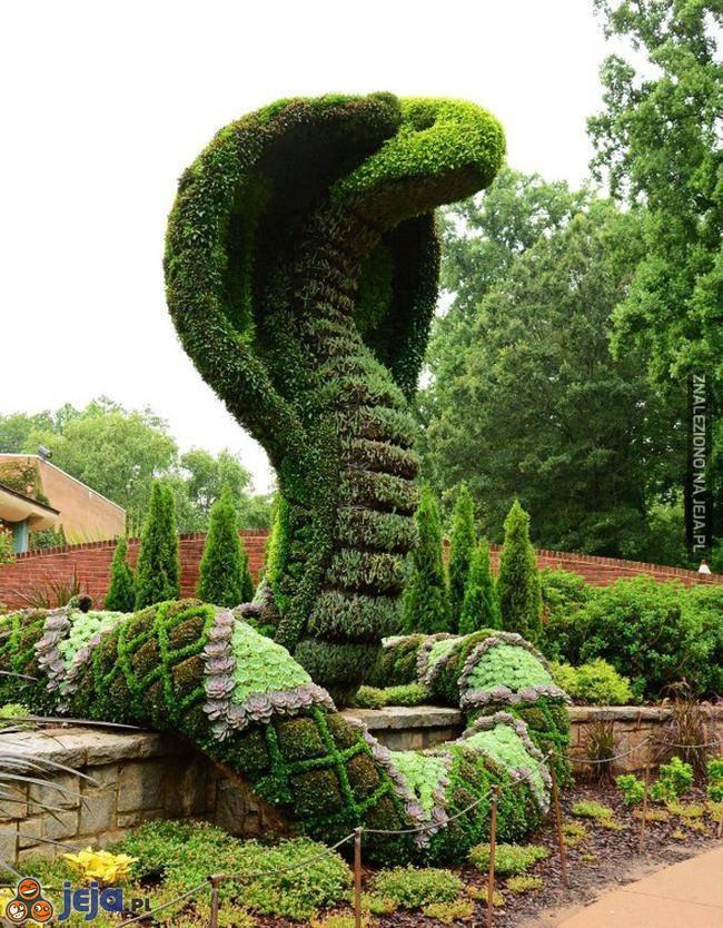 Kobra ogrodowa