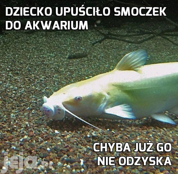 Spodobał się panu rybie