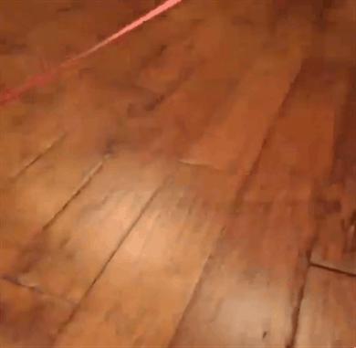 Namawianie kota na spacer