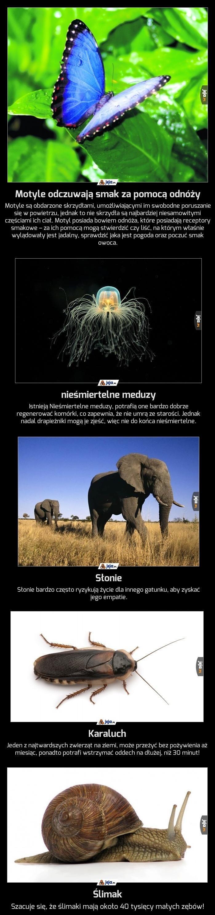 Ciekawostki ze świata zwierząt