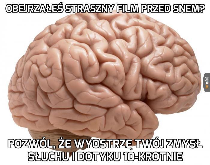 Mózg w strachu