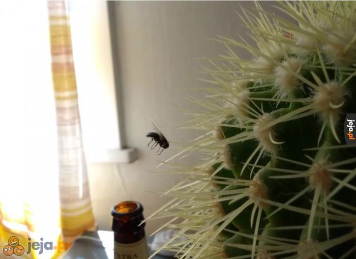 Mało inteligentna mucha