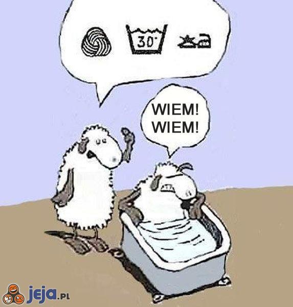 Kąpiel owcy