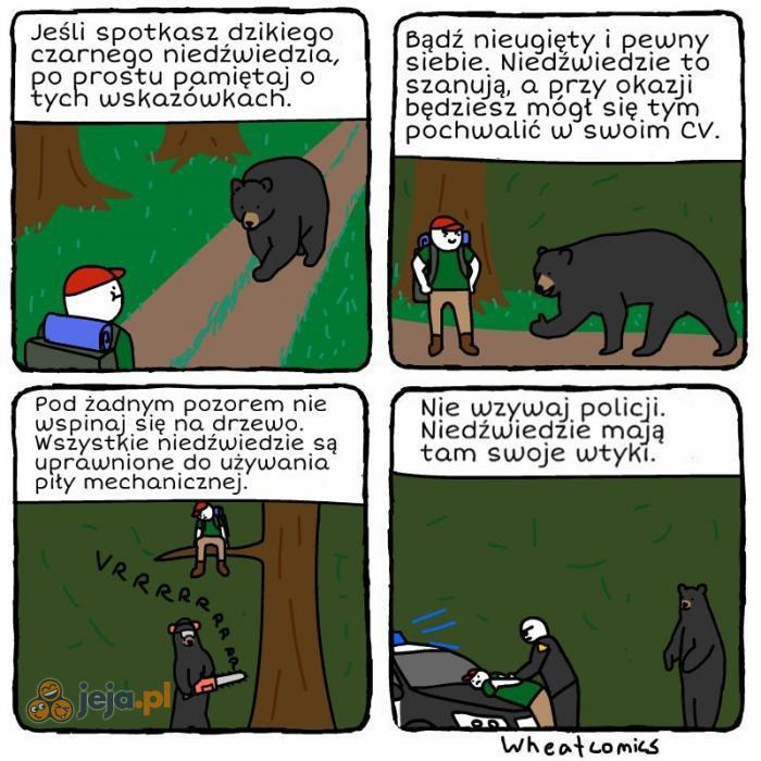 Nigdy nie ufaj niedźwiedziom