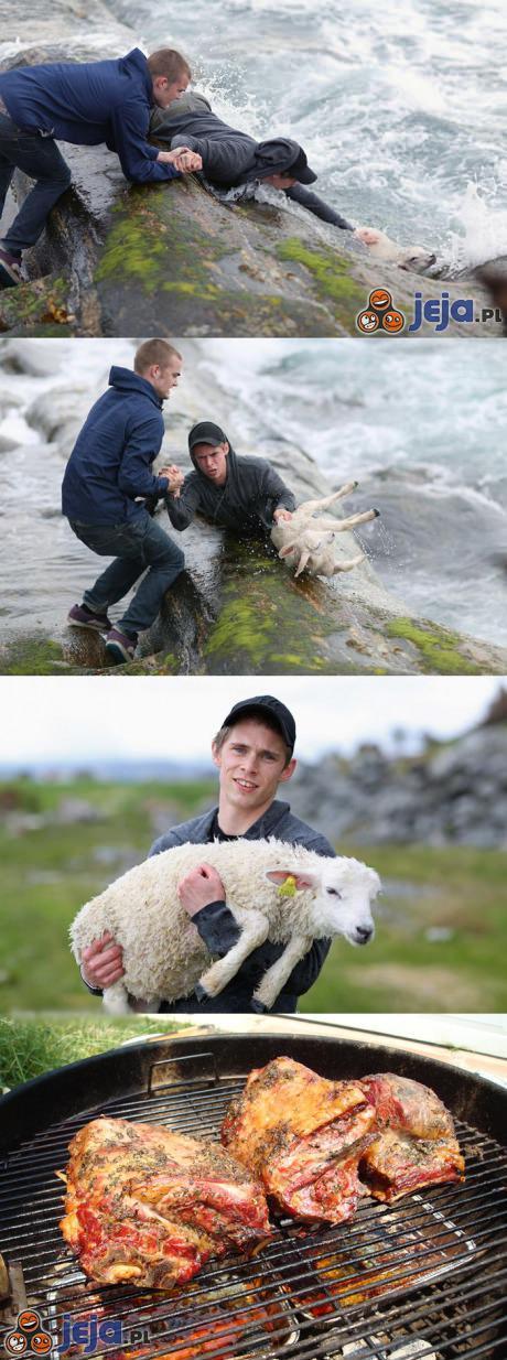Uratował owcę...?