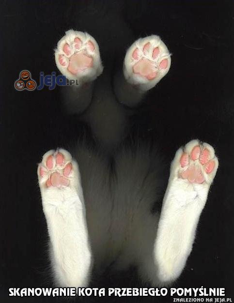 A kiedy Ty ostatnio skanowałeś kota?