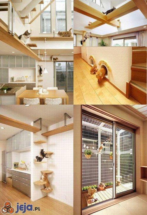 Idealny dom dla kotów