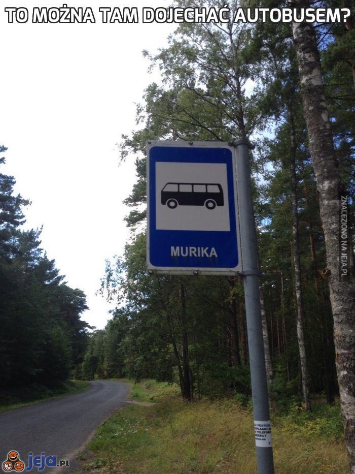 To można tam dojechać autobusem?