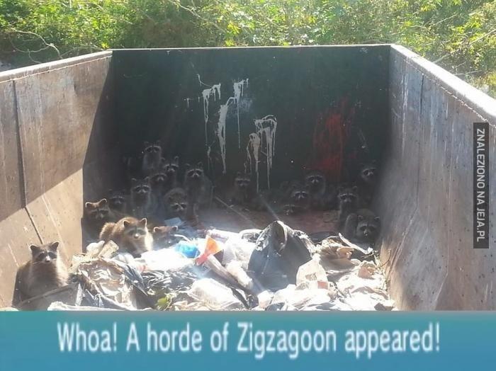 Whoa! Stado Zigzagoonów atakuje!