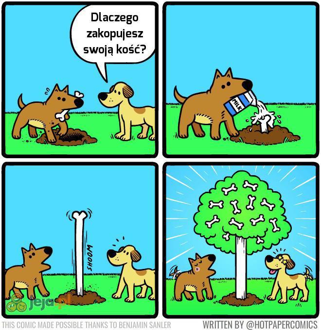 A podobno kości nie rosną na drzewach