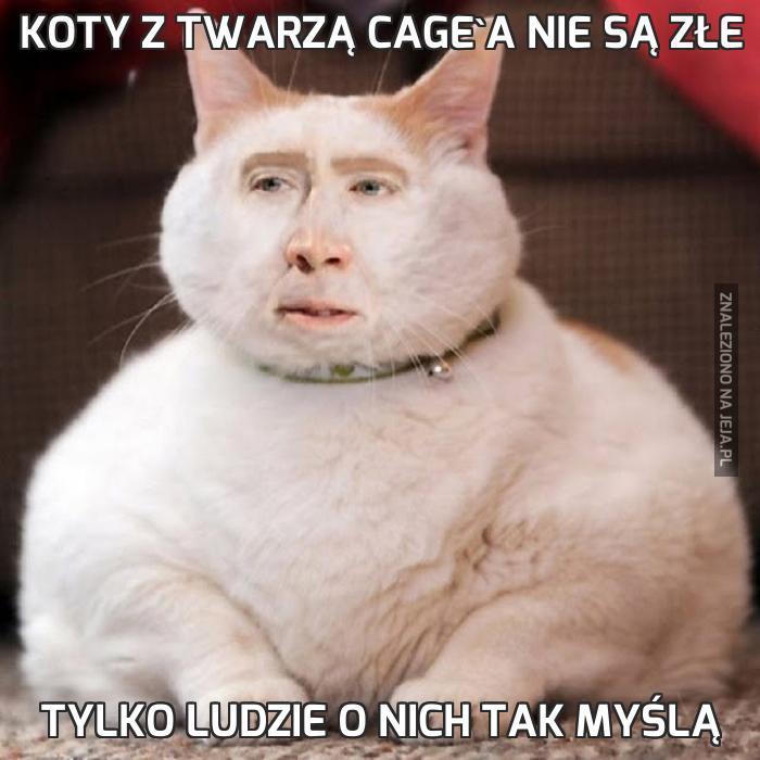 Koty z twarzą Cage'a nie są złe