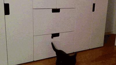 Skąd się biorą czarne koty