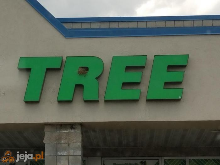 Gniazdo na drzewie