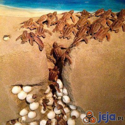 Narodziny żółwików