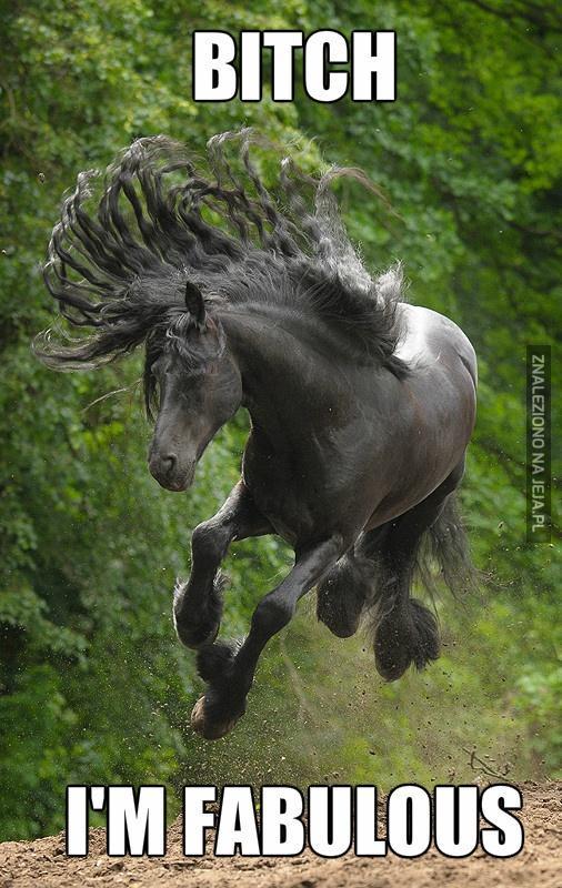 Majestatyczny koń jest majestatyczny