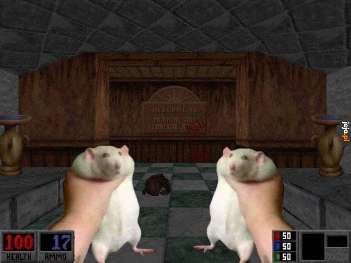Dwa szczury