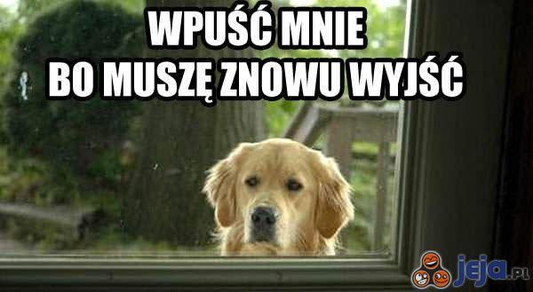 Wpuść mnie!