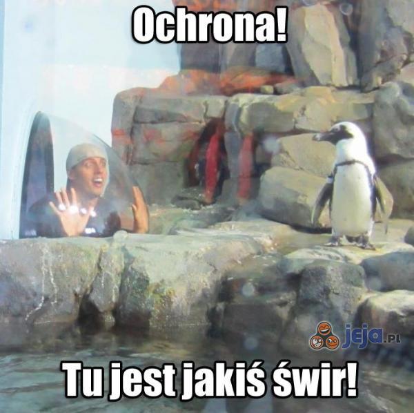 Zaniepokojony pingwin