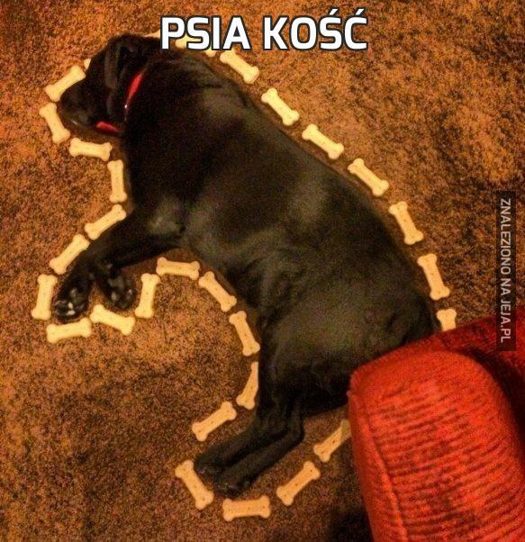 Psia kość