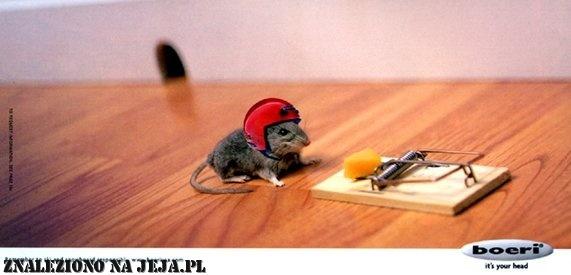 Mysz kaskader