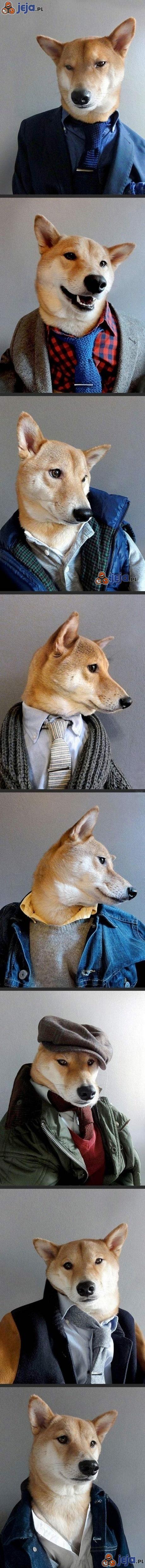 Zwierzaki też powinny być eleganckie
