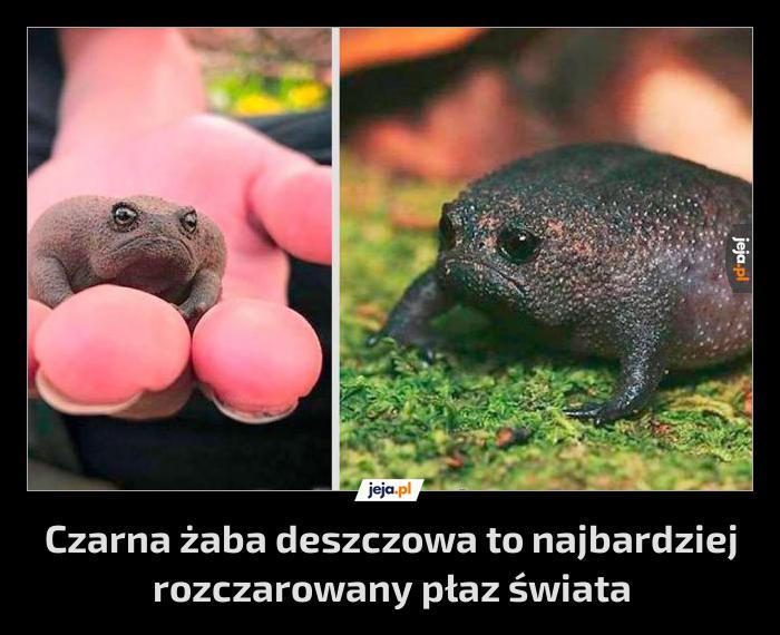 Rozczarowana żabka