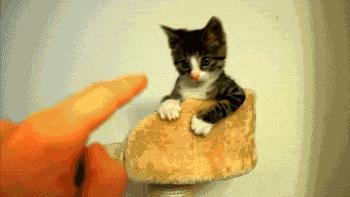Każdy koteł zna kung fu