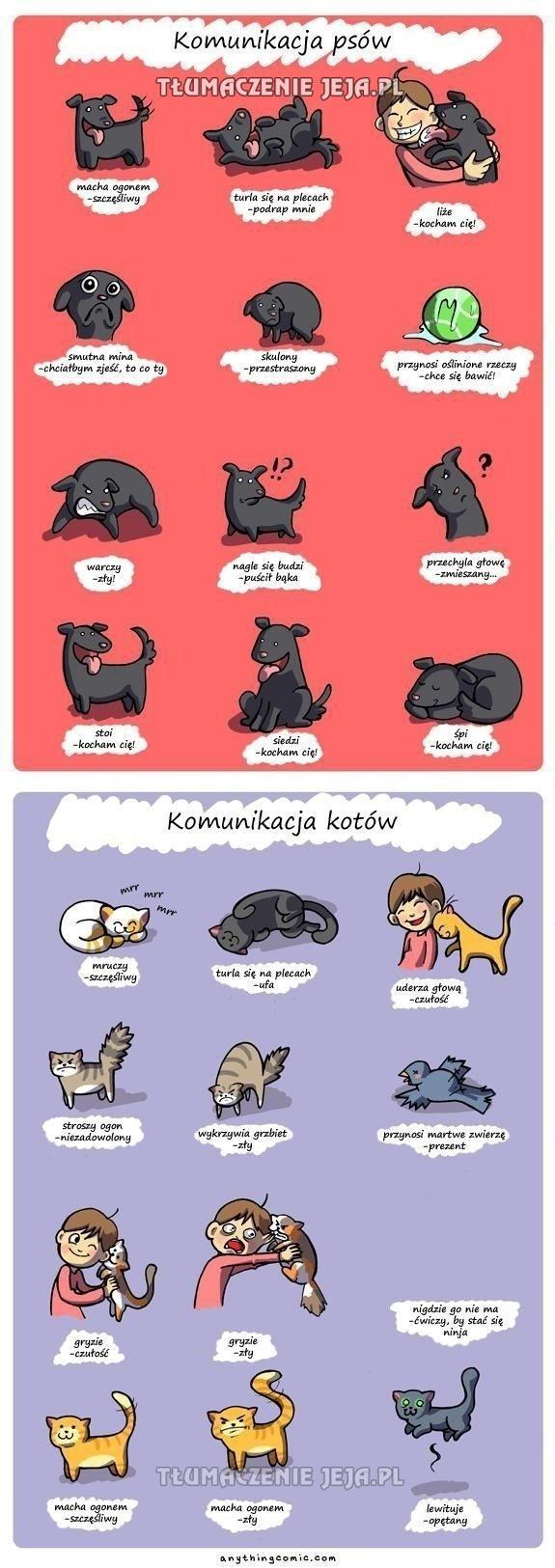 Komunikacja psów i kotów