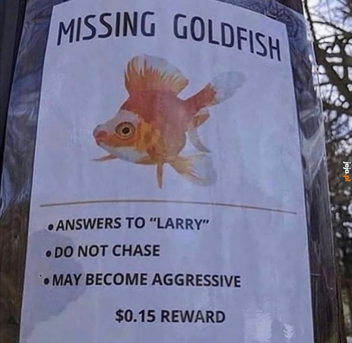 Dajcie mi znać, jak go znajdziecie...