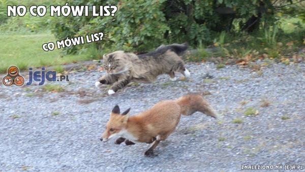 Pościg za lisem