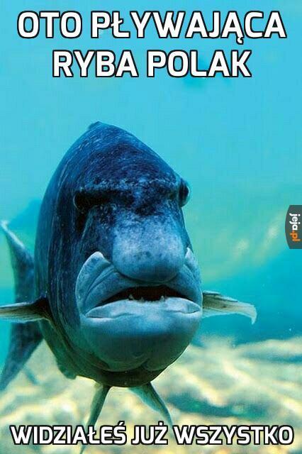Oto pływająca ryba polak