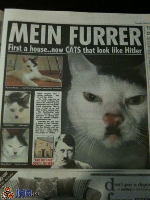 Koty Hitlera