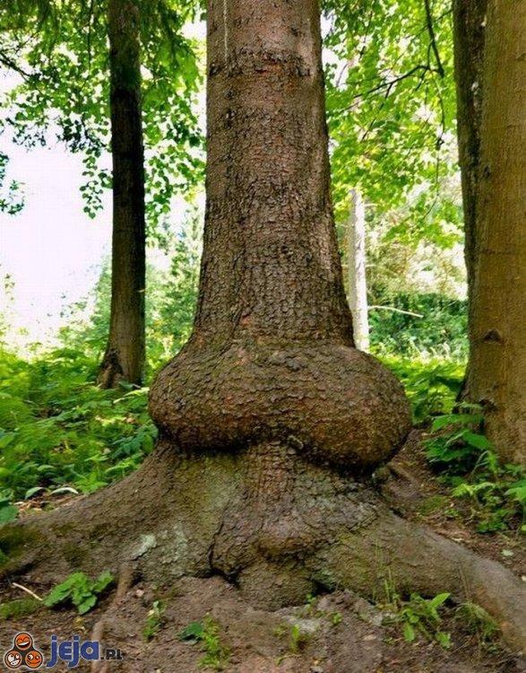 Cuda natury