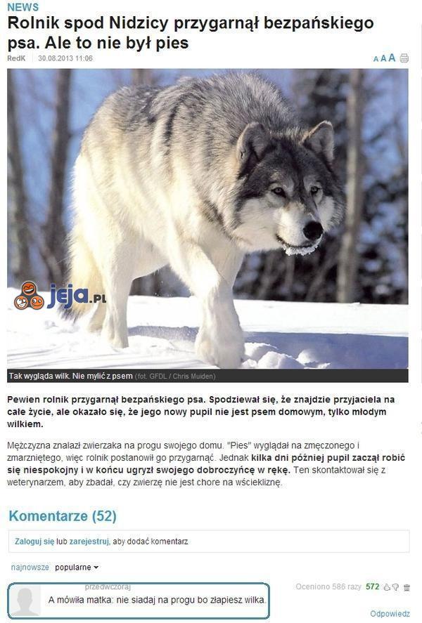 Przygarnął psa, który okazał się...