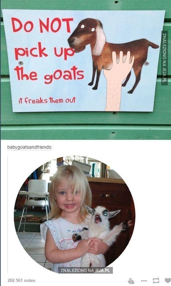 Nie podnosić kóz