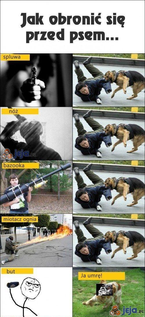 Jak obronić się przed psem