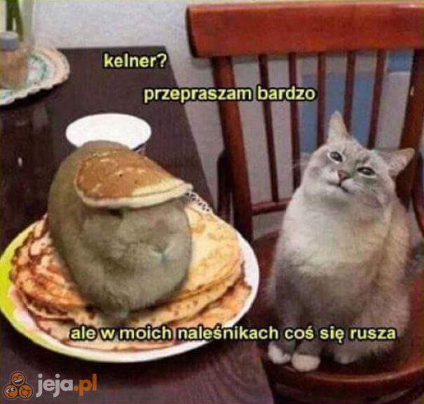 Halo? Ja mam to zjeść?!