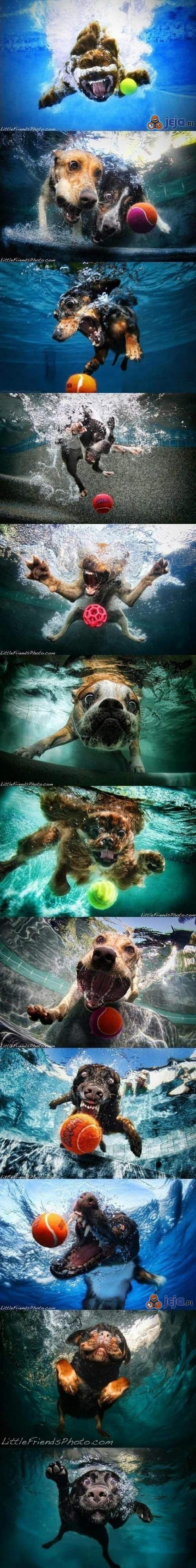 Psiaki w wodzie