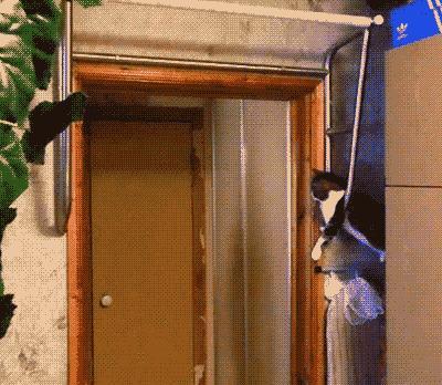 Wsparcie Twojego kota jest motywujące