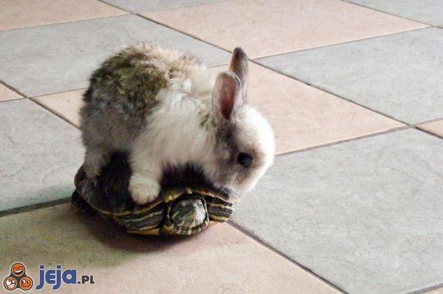 Przejażdżka na żółwiu