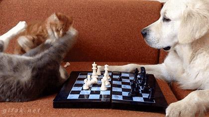 I weź tu graj z kotami w szachy...